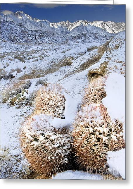 Greeting Card featuring the photograph Snow Covered Cactus Below Mount Whitney Eastern Sierras by Dave Welling