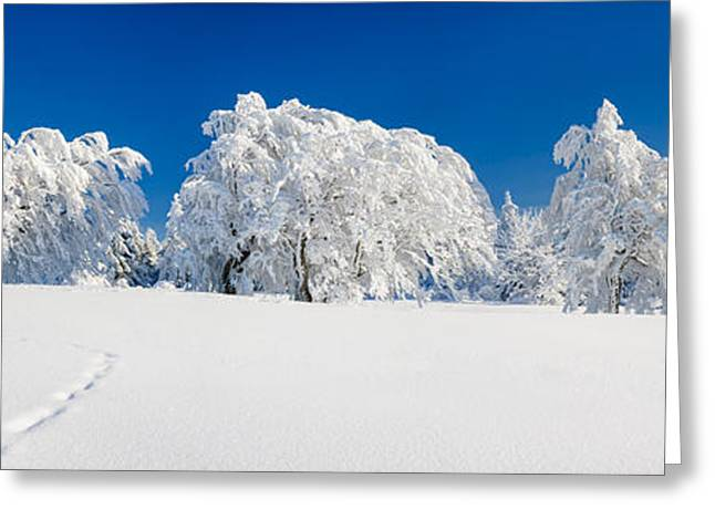 Snow Covered Common Beech Fagus Greeting Card by Panoramic Images