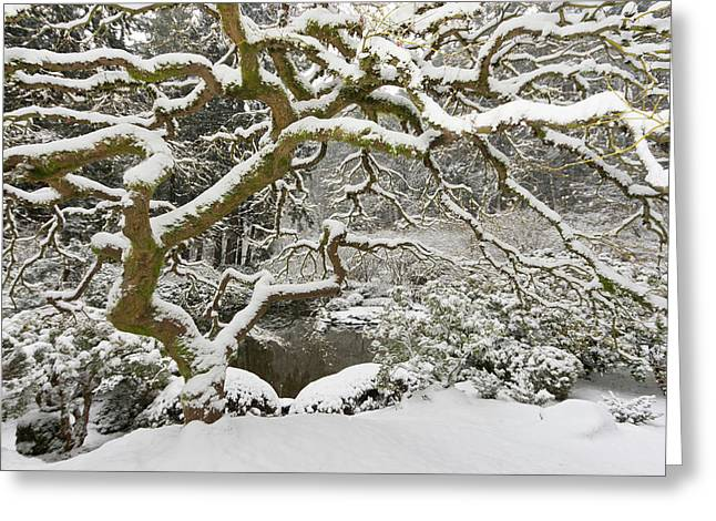 Snow-covered Japanese Maple, Portland Greeting Card by William Sutton