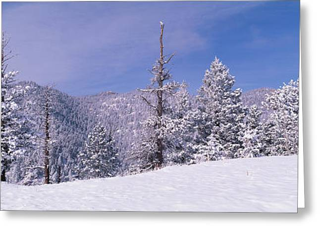 Snow Covered Landscape, Colorado, Usa Greeting Card by Panoramic Images