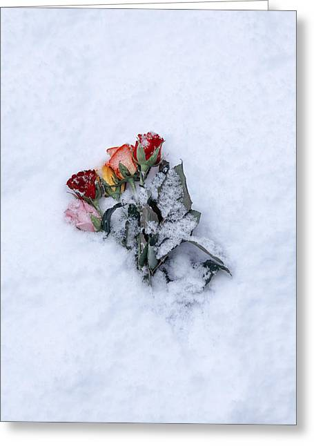 Snow-covered Roses Greeting Card