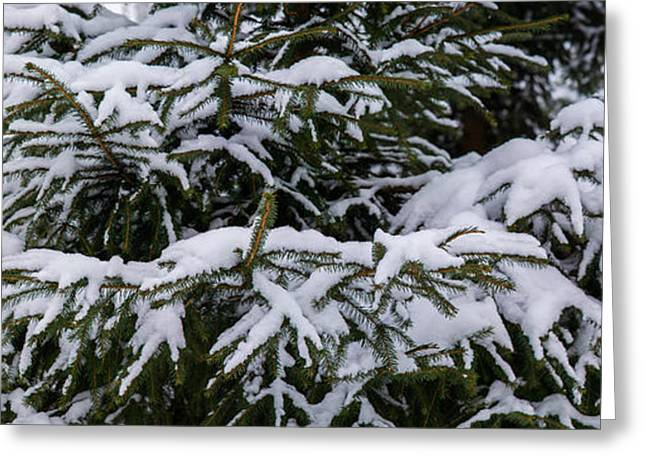 Snow Covered Spruce Tree - Featured 2 Greeting Card by Alexander Senin