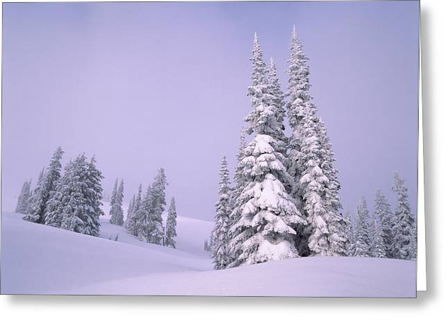 Snow Covered Sub-alpine Fir Trees Greeting Card