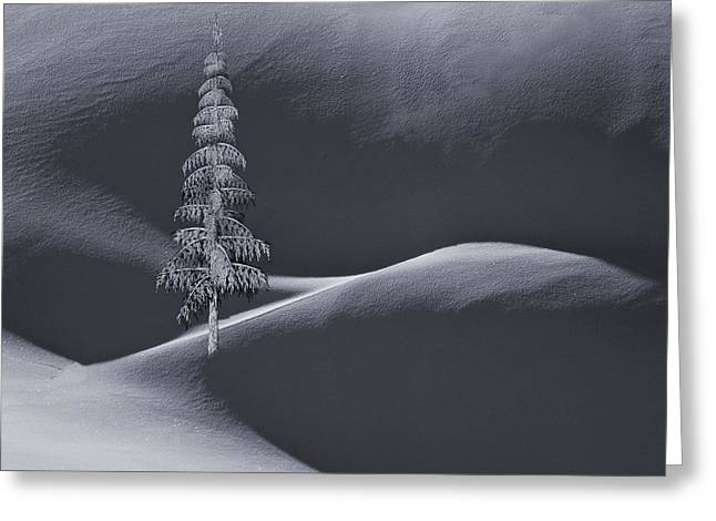 Snow Covered Tree And Mountains Bw Greeting Card by David Dehner