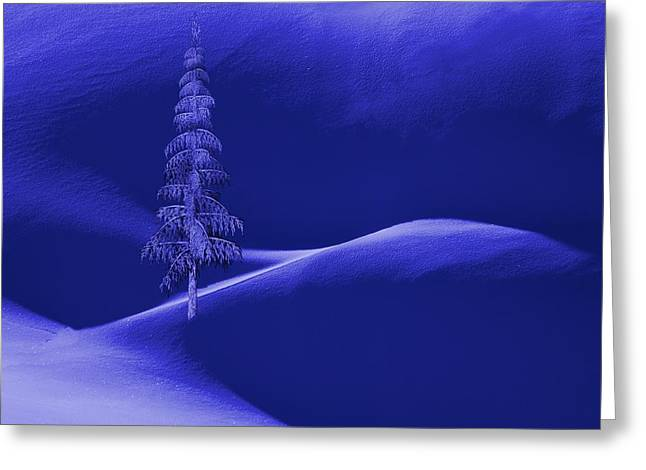 Snow Covered Tree And Mountains Night Greeting Card by David Dehner