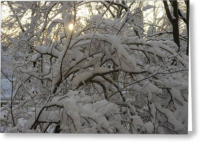 Greeting Card featuring the photograph Snow Covered Tree And Sun by Winifred Butler