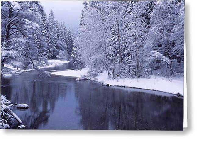 Snow Covered Trees Along A River Greeting Card