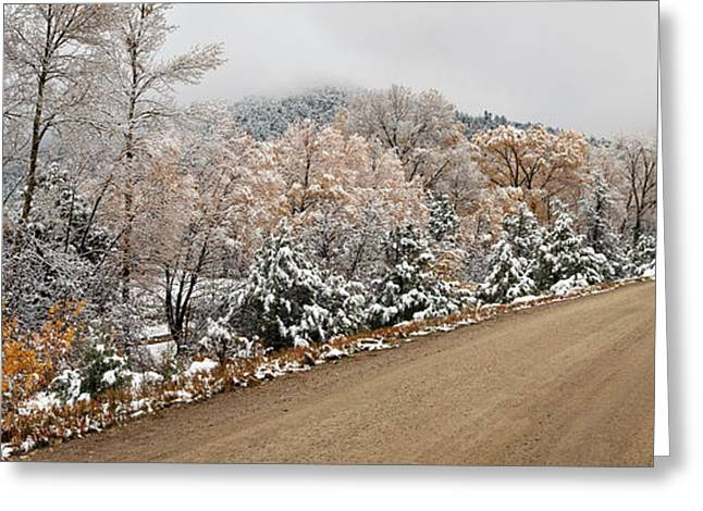 Snow Covered Trees At Roadside, El Greeting Card by Panoramic Images