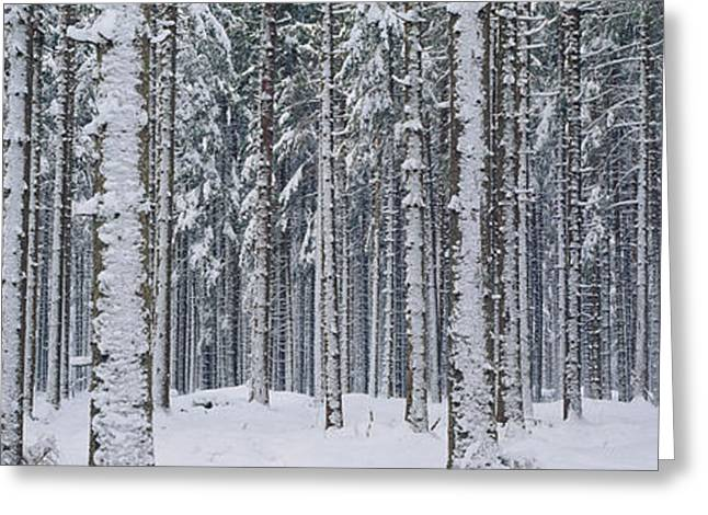 Snow Covered Trees In A Forest, Austria Greeting Card