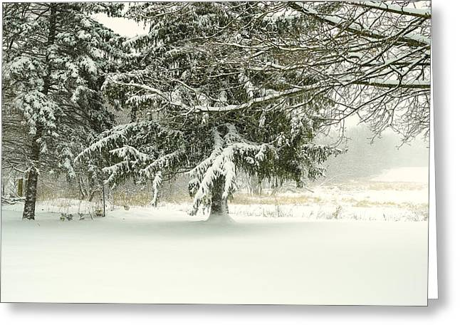 Snow-covered Trees Greeting Card by Lars Lentz