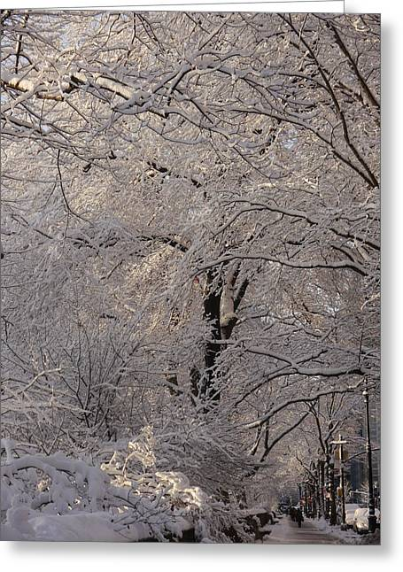 Greeting Card featuring the photograph Snow Covered Trees On Central Park West by Winifred Butler