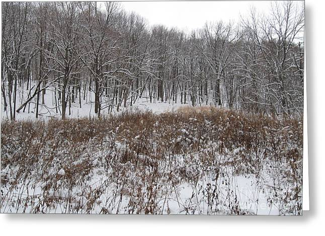 Snow Covered Woodland Greeting Card