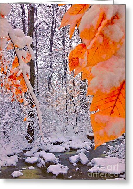Snow Covered Woods And Stream Greeting Card