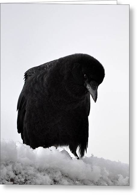 Snow Crow -edition  6 Of 10 Greeting Card