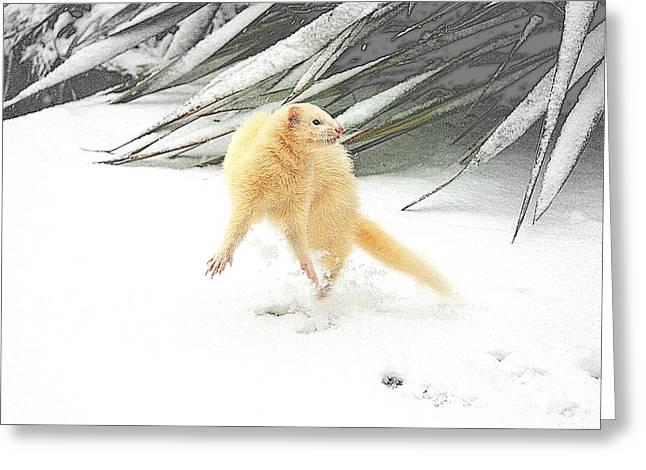 Snow Dance Greeting Card