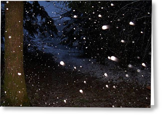 Snow Dance Greeting Card by Steve Battle