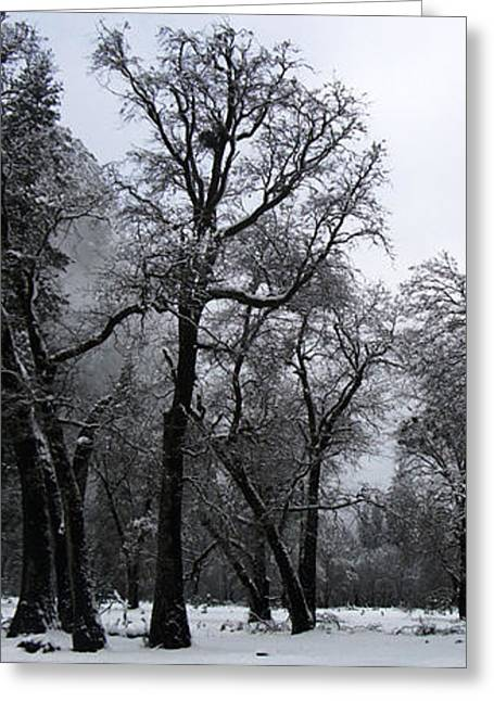 Snow Day 5 Greeting Card by Joanna Pippen