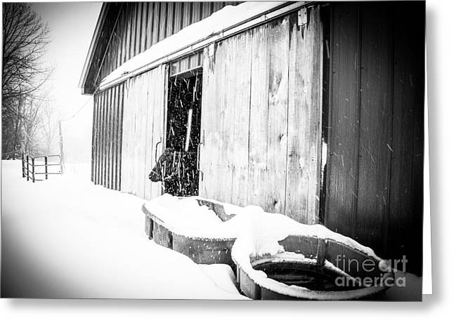 Snow Day Greeting Card by Sue OConnor