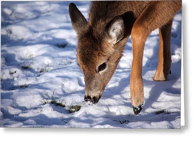 Snow Digging Greeting Card by Karol Livote