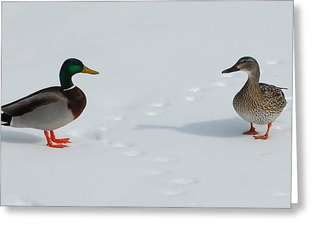 Greeting Card featuring the photograph Snow Ducks by Mim White
