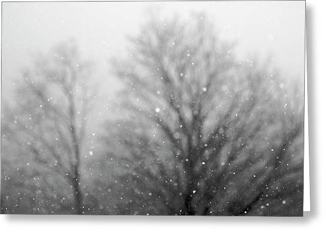 Snow Falling Over A Tree Greeting Card