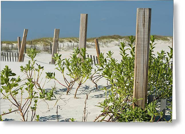 Snow Fence Greeting Card by Denis Lemay