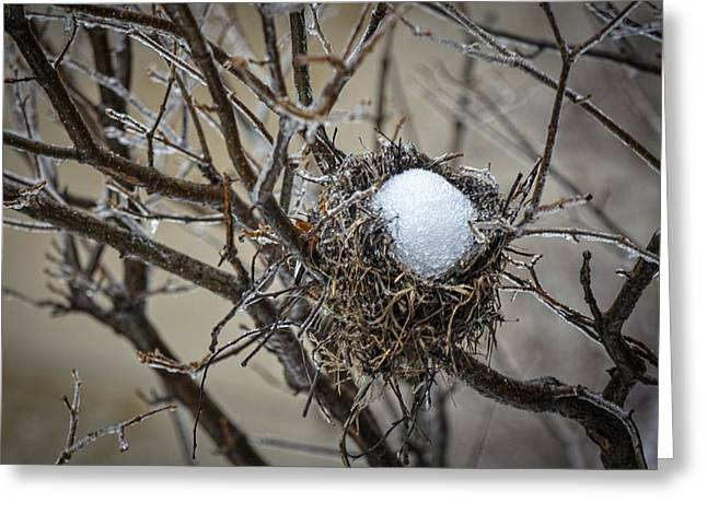 Snow Filled Nest Greeting Card