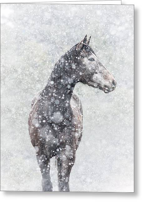Snow Flurry Greeting Card by Pamela Hagedoorn
