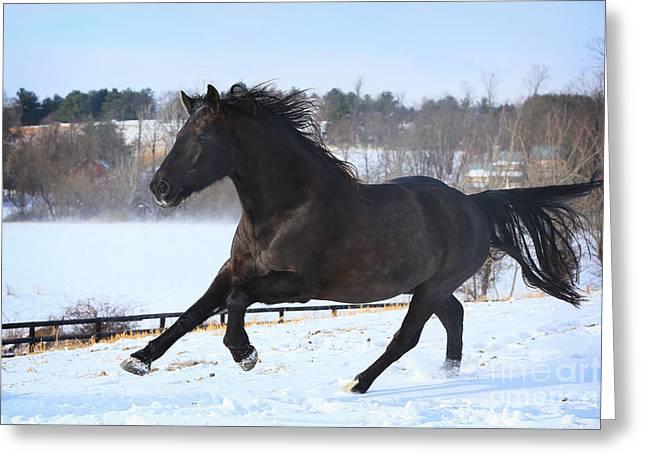 Snow Gallop Greeting Card by Lyndsey Warren