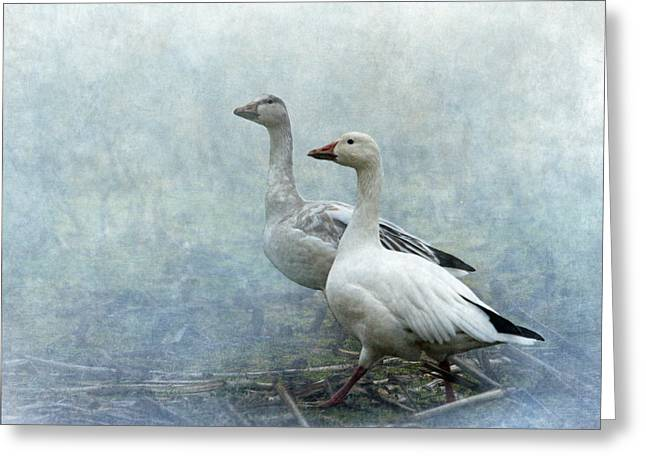 Snow Geese Greeting Card by Angie Vogel