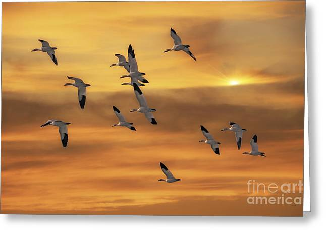 Snow Geese Of Autumn Greeting Card by Tom York Images