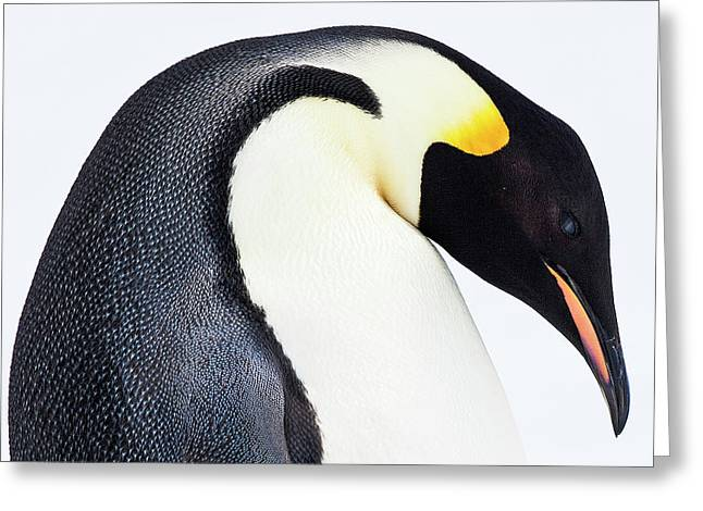 Snow Hill, Antarctica Greeting Card by Janet Muir