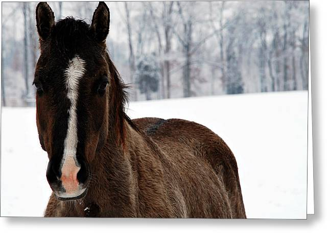 Snow Horse Greeting Card