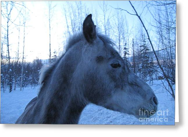 Snow Horse Whisperer  Greeting Card by Elizabeth Stedman