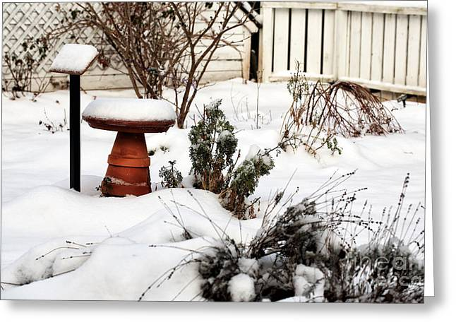 Snow In The Garden Greeting Card by John Rizzuto