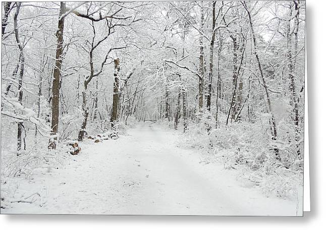 Snow In The Park Greeting Card by Raymond Salani III