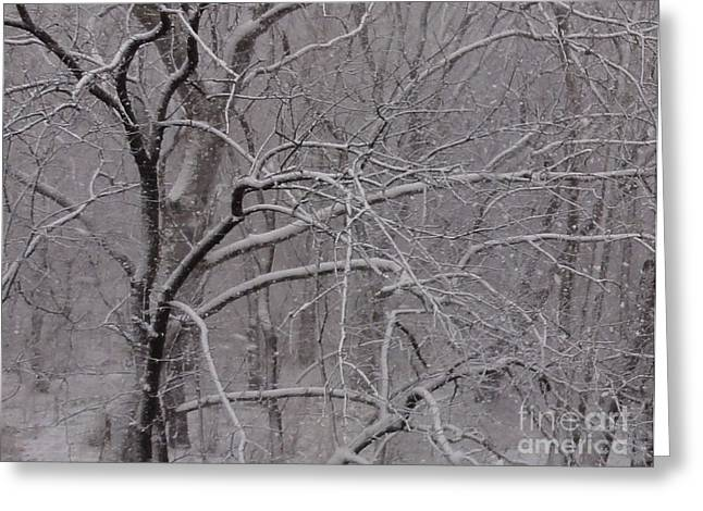 Snow In The Trees At Bulls Island Greeting Card