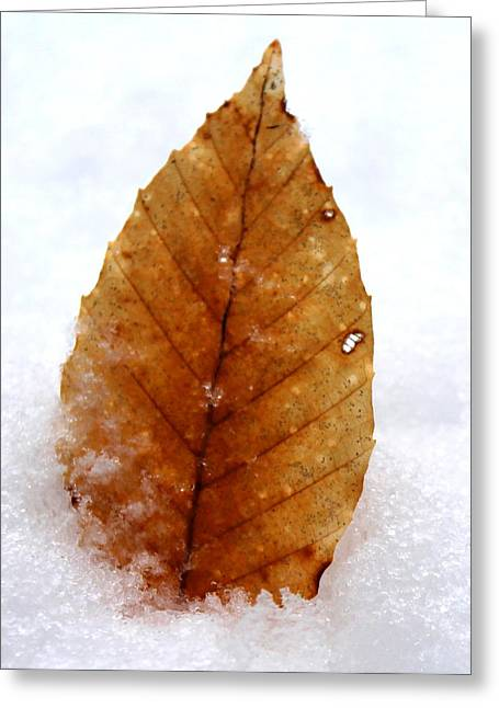 Greeting Card featuring the photograph Snow Leaf by Candice Trimble