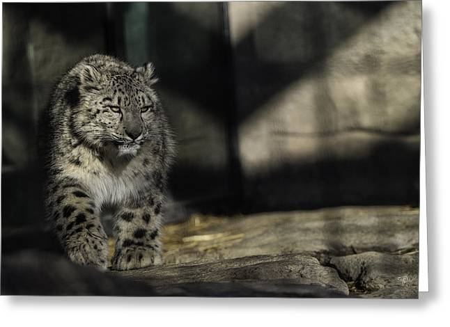 Snow Leopard 2 Greeting Card by Everet Regal