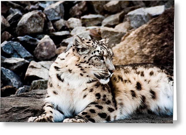Snow Leopard Greeting Card by Daniel Precht