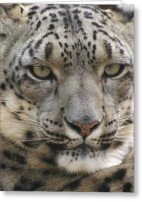 Greeting Card featuring the photograph Snow Leopard by Diane Alexander