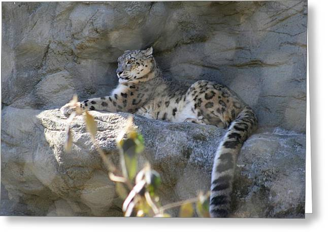 Snow Leopard    No.2 Greeting Card