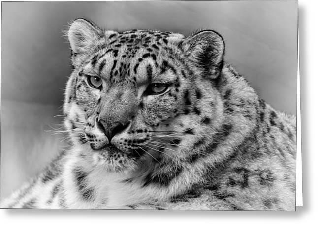 Snow Leopard Portrait Greeting Card by Chris Boulton