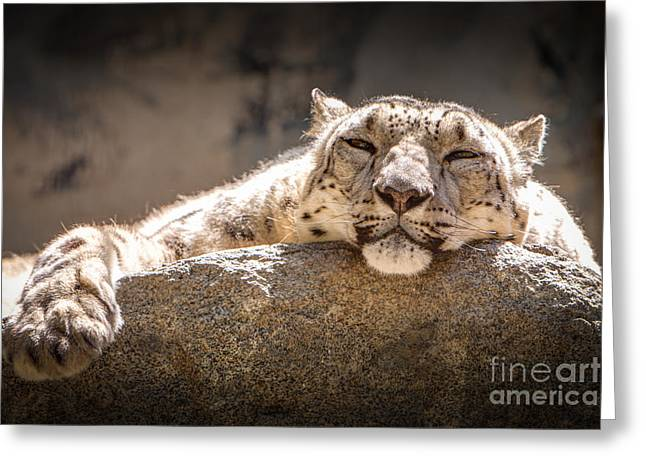 Snow Leopard Relaxing Greeting Card