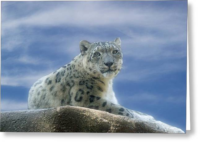 Snow Leopard Greeting Card by Sandy Keeton