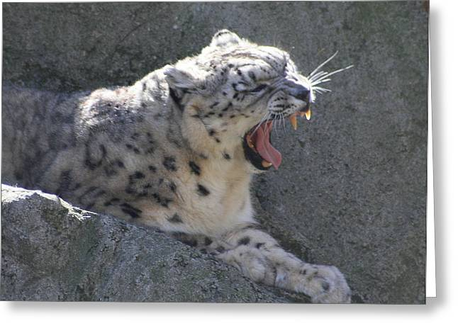 Snow Leopard Yawn Greeting Card by Neal Eslinger