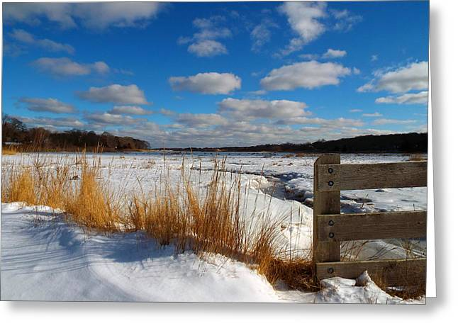 Snow Marsh Greeting Card by Dianne Cowen