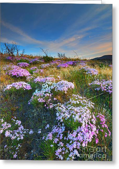 Snow Mountain Cloud Explosion Greeting Card by Mike  Dawson