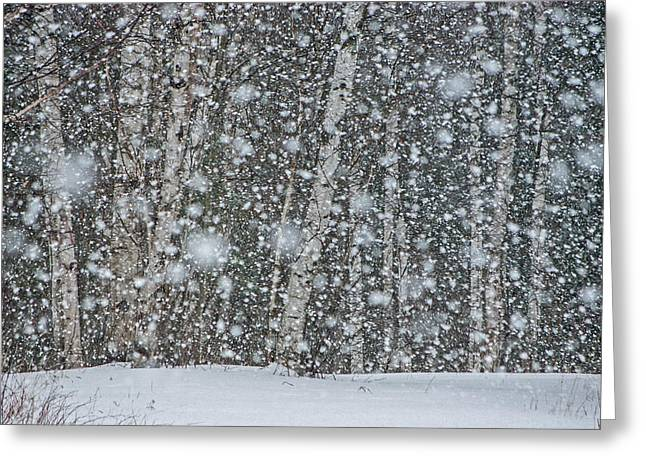 Snow On Birch  Greeting Card