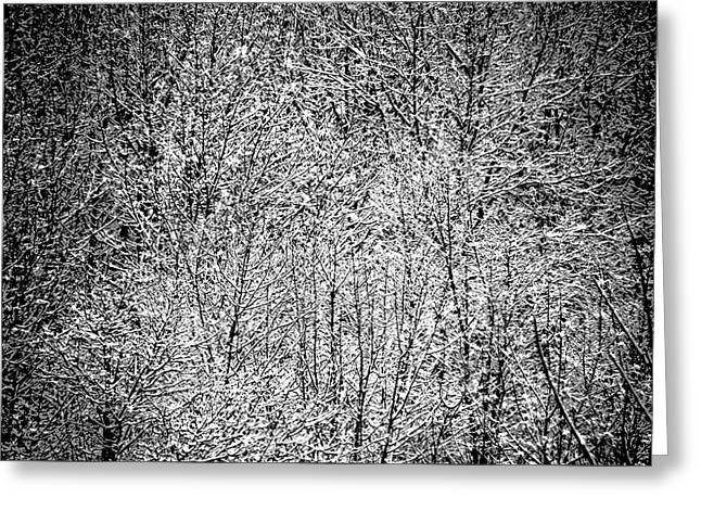 Snow On Snow Greeting Card by Jacqueline M Lewis